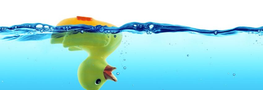 duck floating upside down
